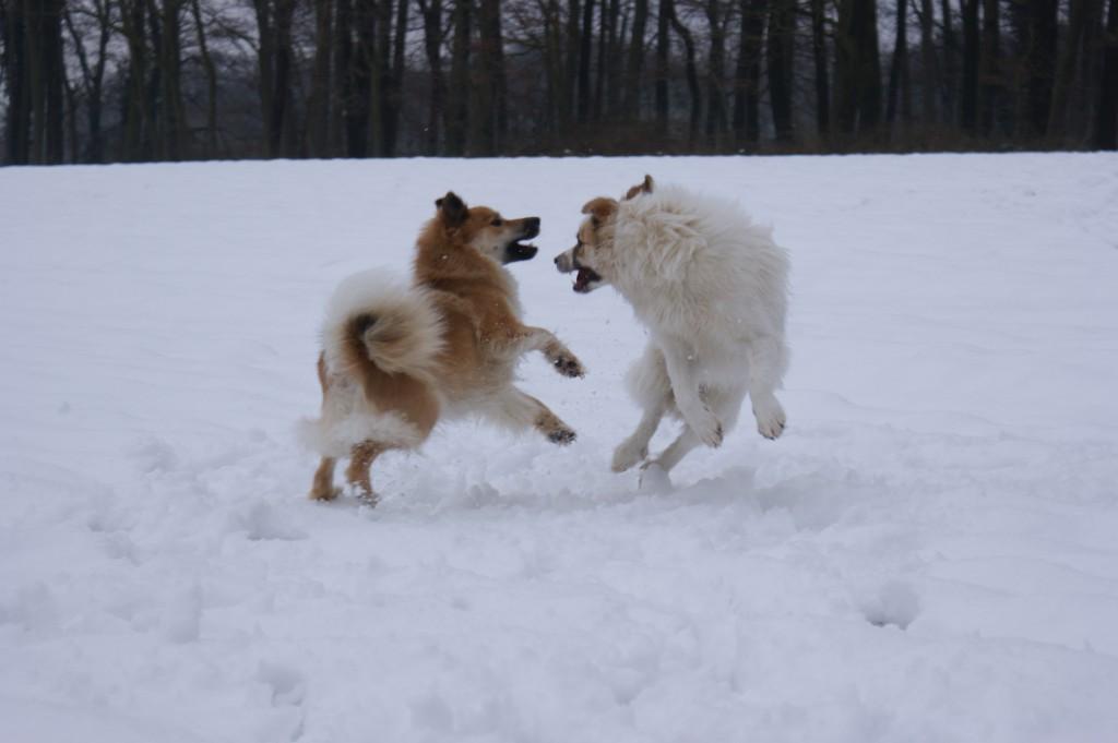 Dancingdogs2