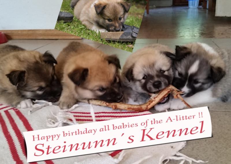 Geburtstag inspirly-Happy-birthday-all-babies-of-th
