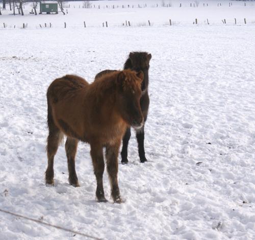 Absetzerweide_januar2010_7
