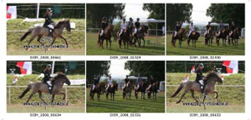 DJIM 2008_14