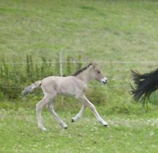 Fenjadottir_2008_6klein