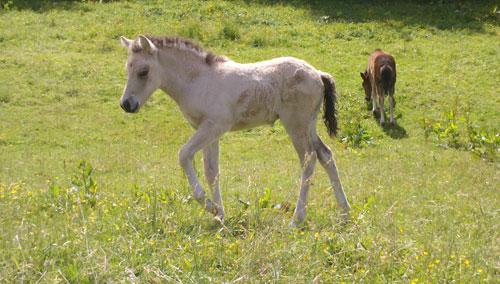 Fenjadottir_juni2012_2