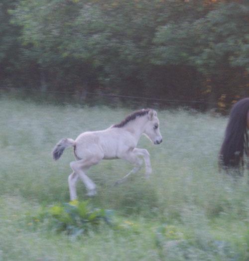 Fenjadottir_mai2012_28