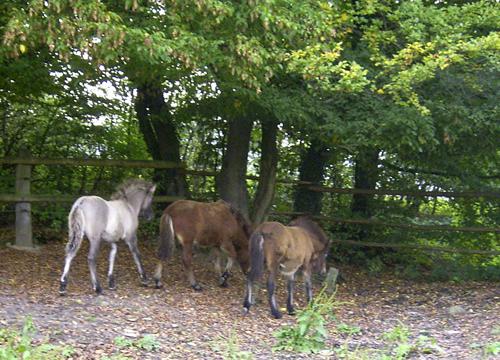 Fohlenbande_2006_oktober1