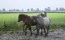 Fohlenbande_2006_oktober15k