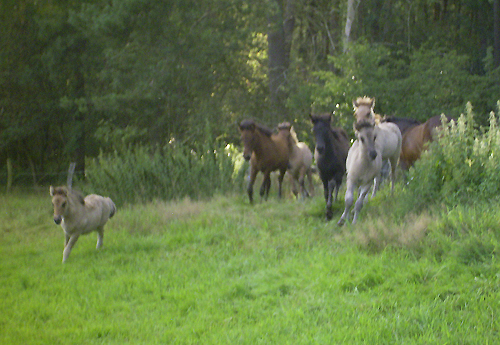 Fohlenbande_august2008_1