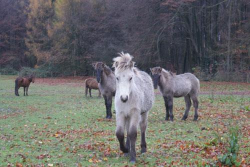 Fohlenbande_november2010_8