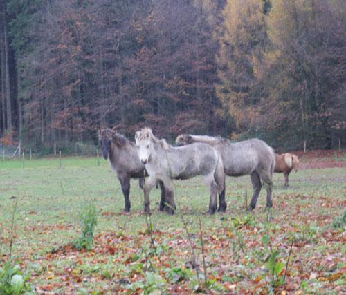 Fohlenbande_november2010_9