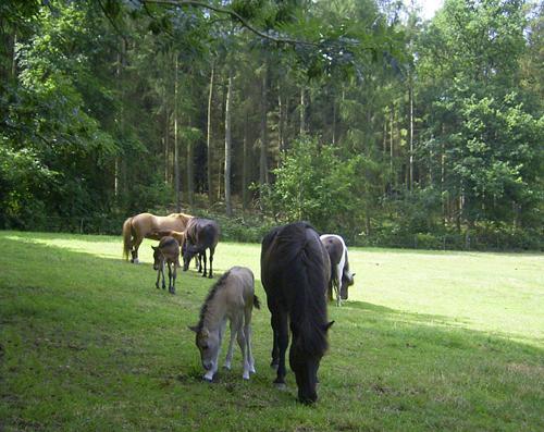 Fohlenweide2006_web