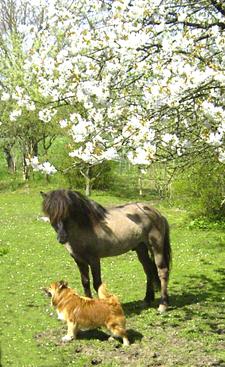 Fruehling2006_4klein