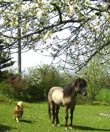Fruehling2006_8klein
