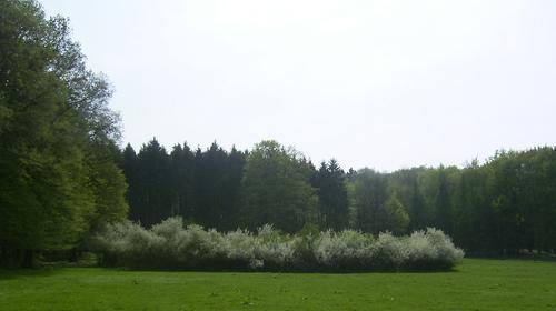 Fruehling2009_10