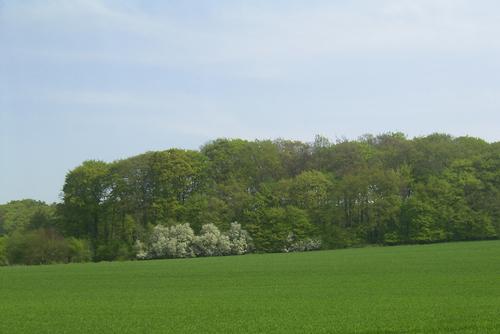 Fruehling2009_5