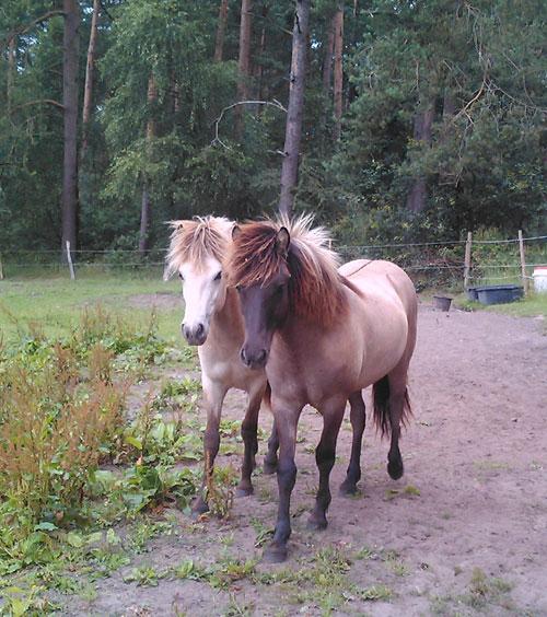 Glymur_leifur_juli2011_17