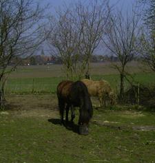 Hetja_Bjartur_April2009_1klein