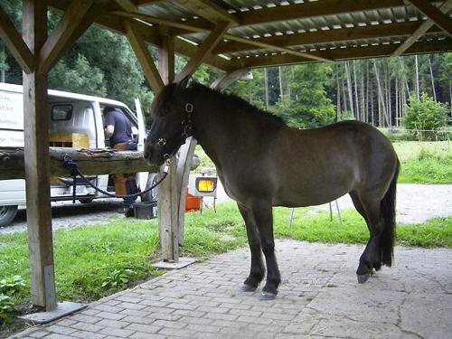 Hufschmied_2008_1
