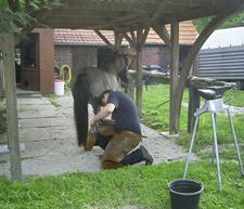 Hufschmied_2008_3klein