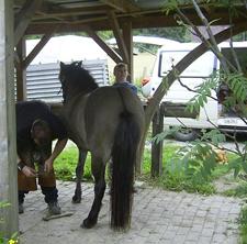 Hufschmied_2008_4klein