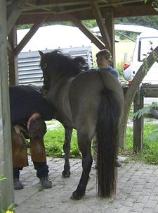 Hufschmied_2008_6klein