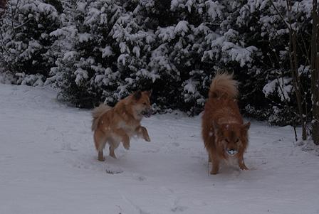 Islandhunde_Januar2014_1