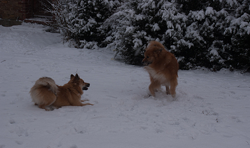 Islandhunde_Januar2014_3