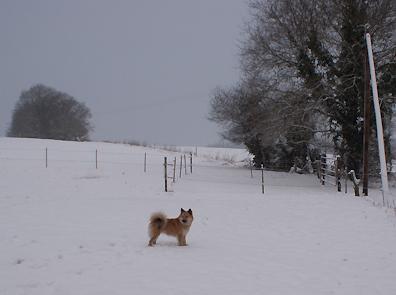 Islandhunde_Januar2014_4