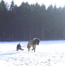 Januar2006_leiknir14web