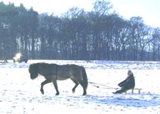 Januar2006_leiknir17web