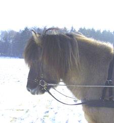 Januar2006_leiknir8web