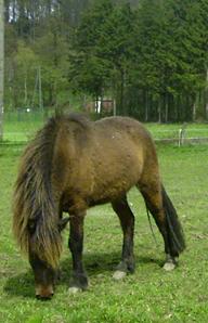 Kaspar_2006_2