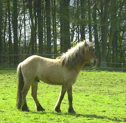 Keilir2006_1