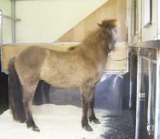 Pferdetransport_februar2008_3klein