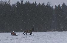 Schlittenfahrt_dezember2009_37klein