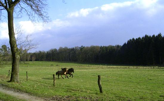 Weide_april2006_6