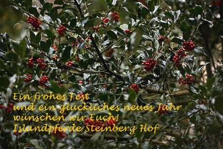 Weihnachtsgruss2008_ilex3