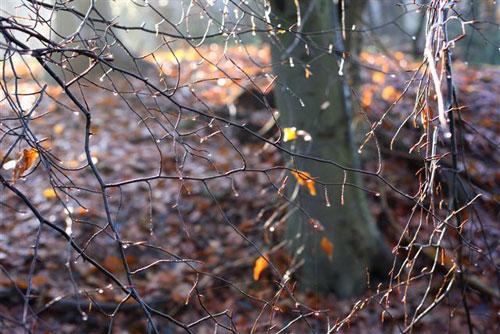Winterbild_2005_Tropfen