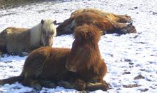 Winterschlaf2_2006_klein