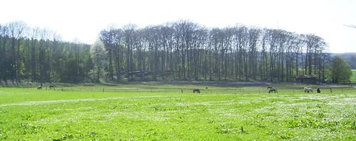 stutenweide_april2007_3