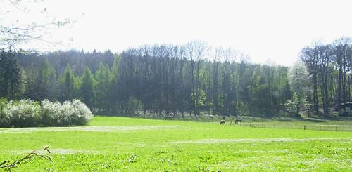 stutenweide_april2007_4