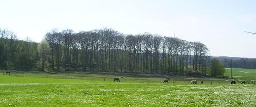 stutenweide_april2007_6