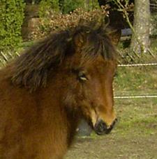 Hnottsohn_januar2007_2