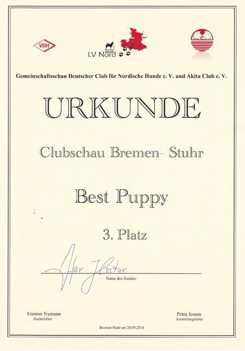 Kari-Puppy-Clubschau-Bremen-2014