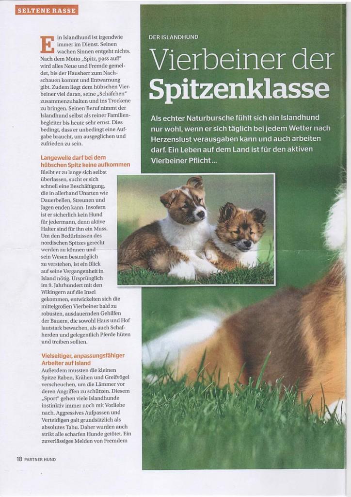 Rasseportrait-Islandhund-1