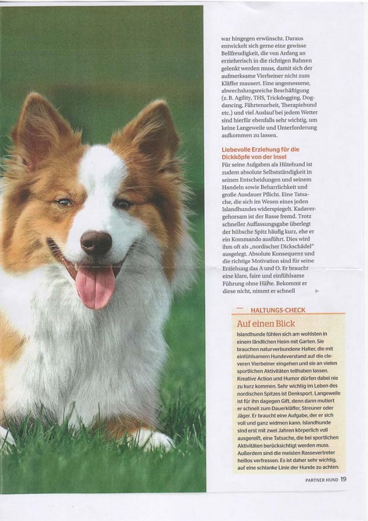Rasseportrait-Islandhund-2