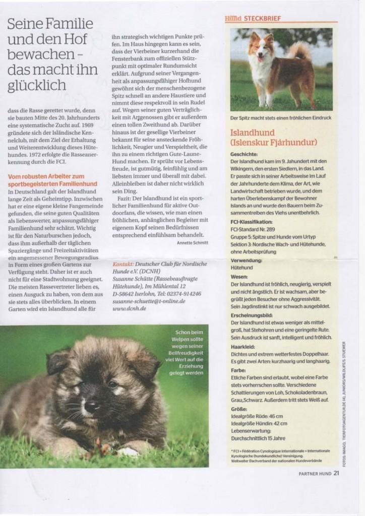 Rasseportrait-Islandhund-4